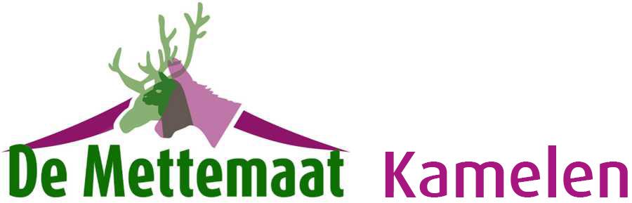 Fokkerij, verkoop en verhuur van echte kamelen: de Mettemaat!